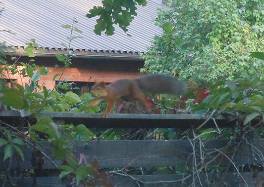 130831squirrel
